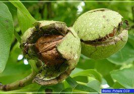 Орехи для сердца