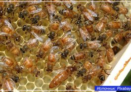 Спасибо пчёлам