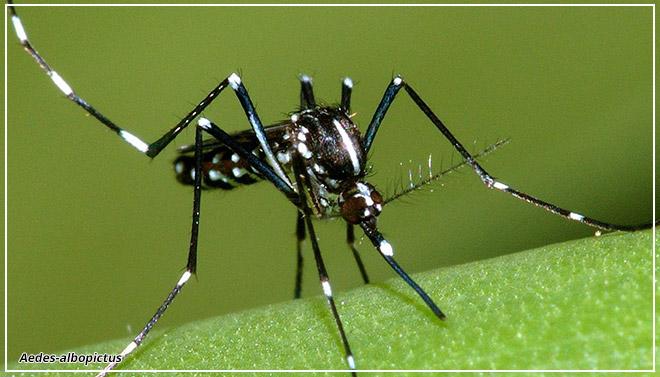 Комары повели в счёте