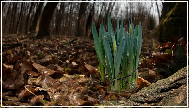 Зима весною притворяется