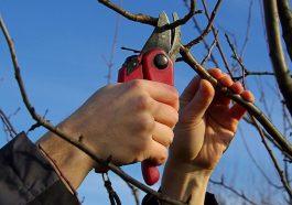 Выбираем инструменты для обрезки растений