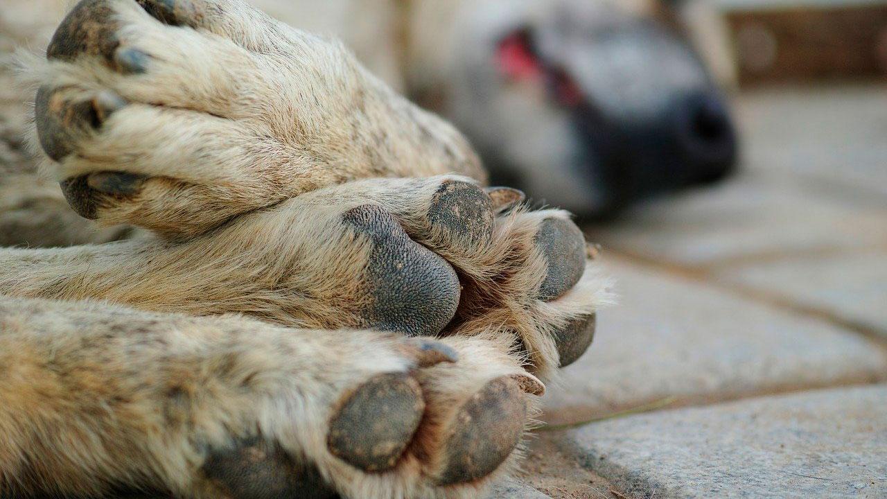 Кормить или не кормить бездомных животных?