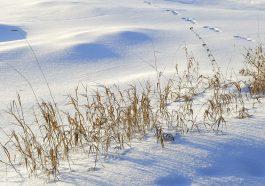 Приднестровские аграрии получат налоговые льготы