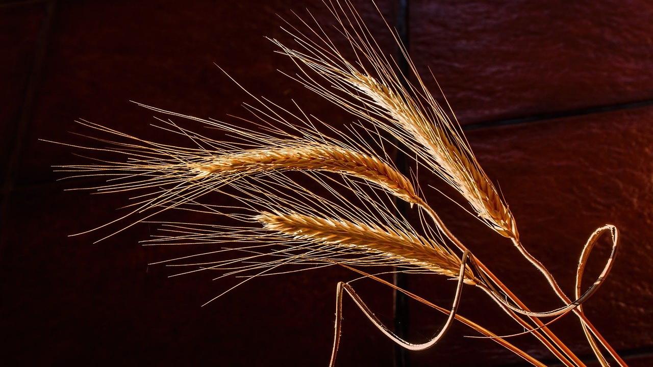 Россия стала лидером по экспорту продовольствия