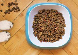 Приднестровье начало производство сухих кормов для животных