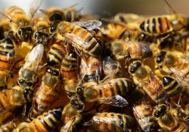 В Турции собрали мёд по 10 тысяч евро за кило