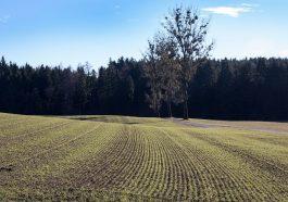 Приднестровье надеется на хороший урожай