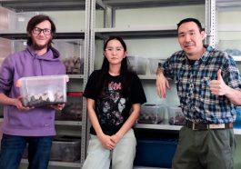 Якутские жуки способны перерабатывать пластик