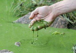 Цветущие водоёмы опасны для жизни