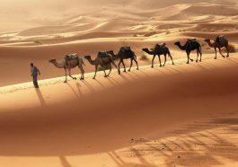 Африка и Ближний Восток превратятся в филиал ада