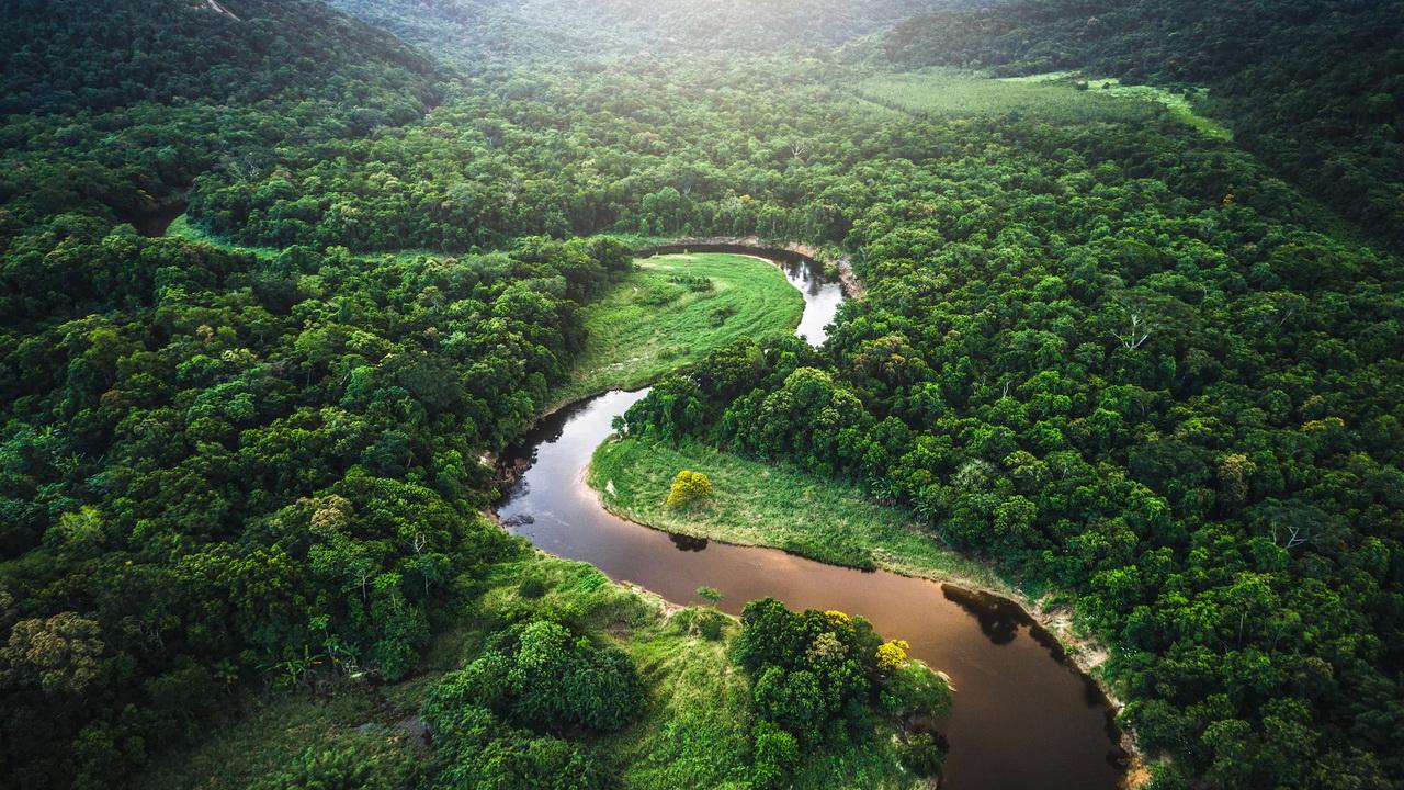 Армия встанет на защиту лесов